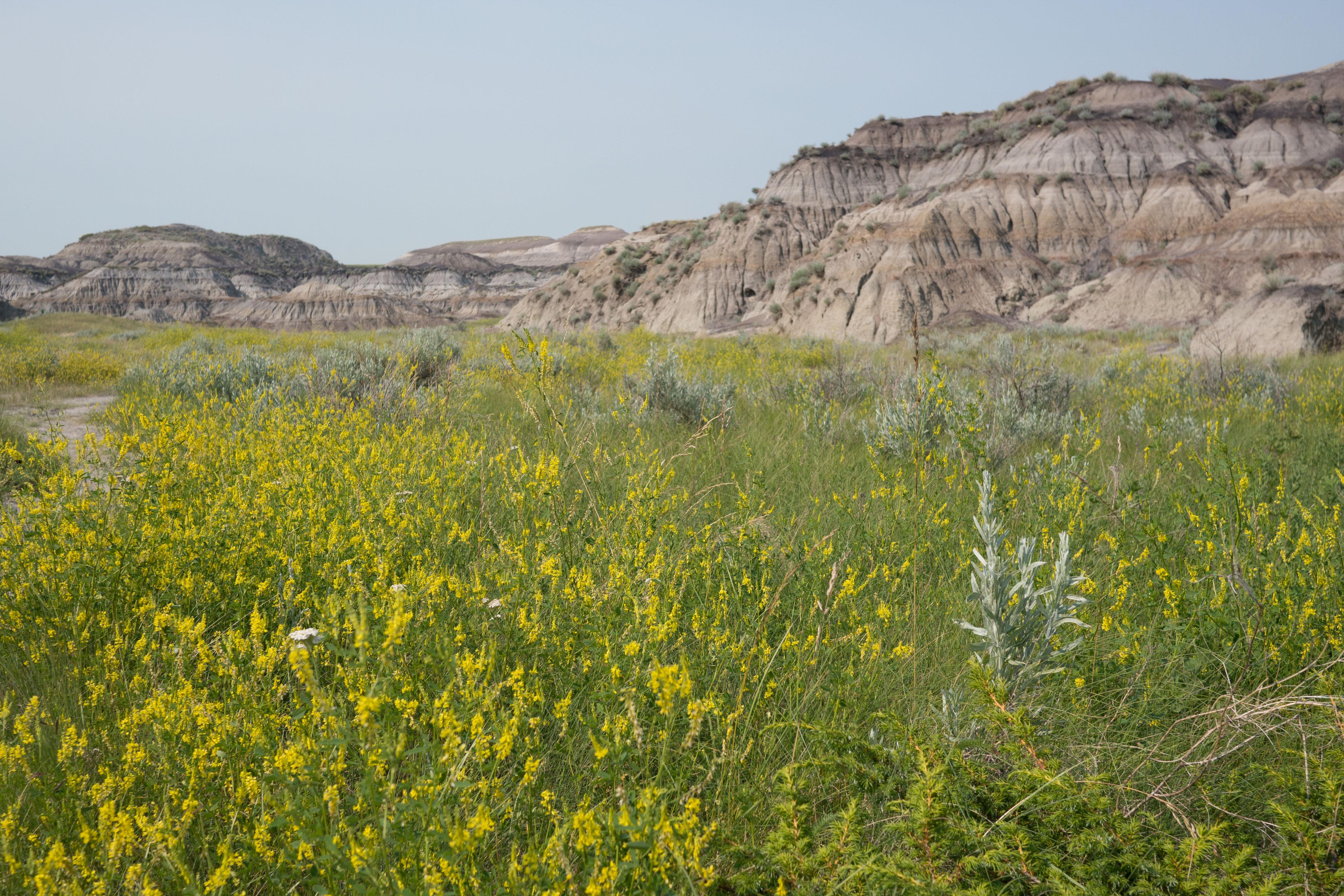 Auch im Horseshoe Canyon sind die Felsformationen der Badlands zu finden